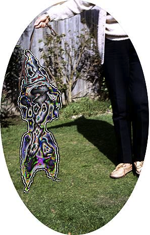 i am not a hula girl, i am not a dog,#2 2005 lambda print, 800 mm w x 450mm h