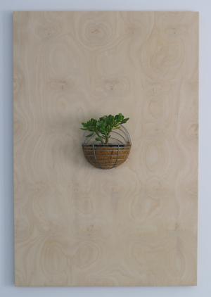 Untitled 2007 Hoop pine plywood, cedar, plant, wire frame 150 x 100 x 19 cm